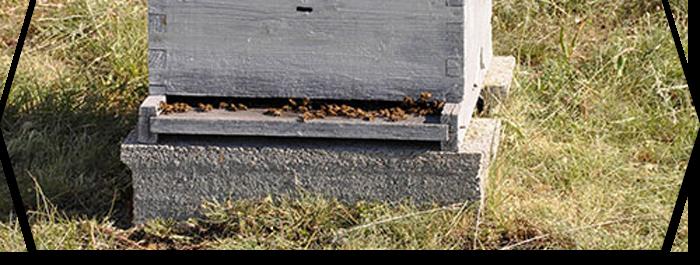 Fabrication d'une ruche : une solution pour les bricoleurs et les connaisseurs